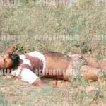 1 Dead Body.jpg